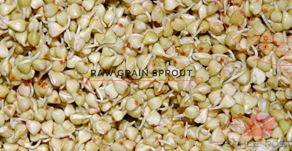Are Raw grain sprout good or bad to our health