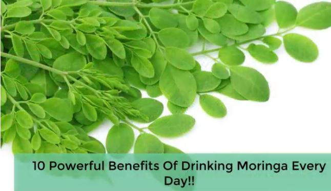 10 powerful benefits of daily drinking Moringa