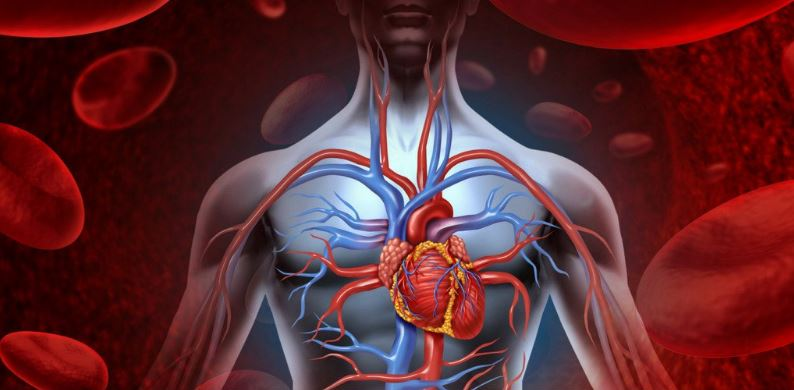 Essential Oils to Improve Blood Circulation