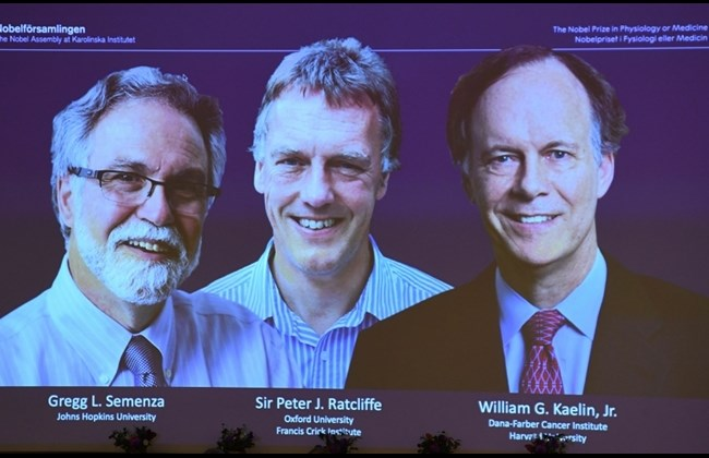 Work on cell response to oxygen gets medicine Nobel
